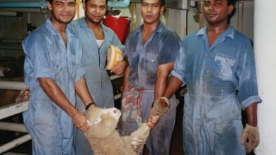 Photo of Live Animal Export: Industrial insecurity