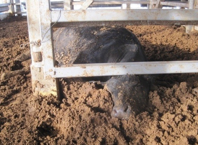 Live Animal Export: Trapped at sea