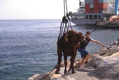 Live Animal Export: Escapees: Part 1