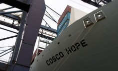 China Cosco Shipping vows to stop transporting shark fins